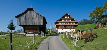 Luzern_Schwarzenberg_Scharmoos_Bauernhof_Lamas.jpg